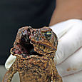 Unfortunate toad