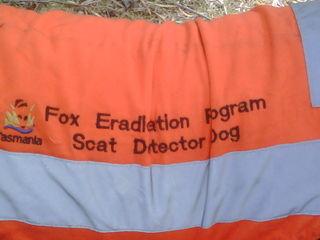 Scat detecting dog's coat