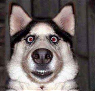 DogObedienceTraining