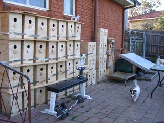 The nest box production area in PhD student Kate Grarock's backyard. Presumably she has understanding flatmates.