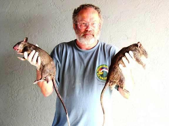 Witmer with Gambian Rats